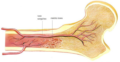 remedios naturales para la gota en el pie alimentos que no puedo comer con acido urico alto el queso tiene acido urico