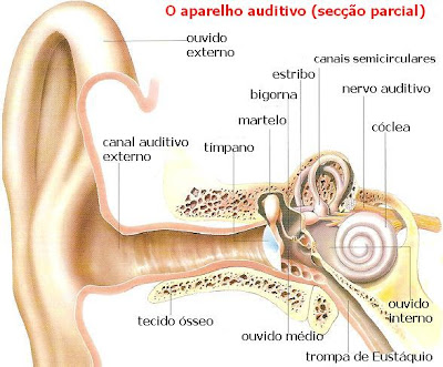 Stres Snet O Ouvido E A Audição Funções E Doenças