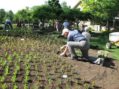 Image result for Planting annuals at Rotary Botanical Gardens