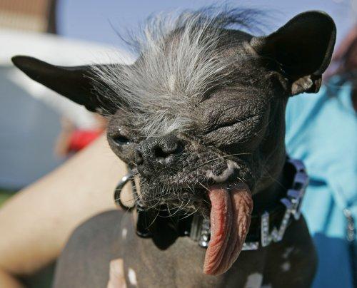 [Uglydog.jpg]