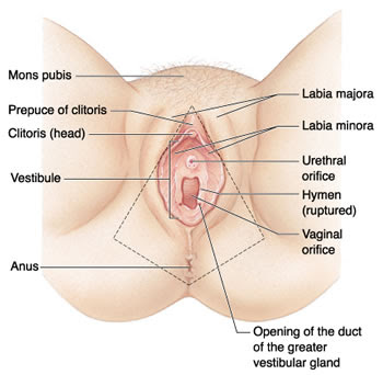 vagina, laser vaginal rejuvenation, spa, spa vagina, v-spa, perawan ...