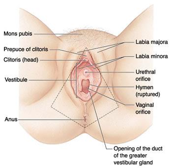 Britney spears vagina, vaginas, perawatan vagina, vagina treatment, vagina, peremajaan vagina, laser vaginal rejuvenation, spa, spa vagina, v-spa, perawan, keperawanan, virgin, selaput dara, perineum, stress urinary incontinence, Laser Reduction Labioplasty, Reduction, Labioplasty, Perineoplasty, Hymenoplasty, Sedot lemak estetik, mons pubis, labia majora, Vaginoplasty, ratus, intimate care, ratus javanese experience( RSE), organ intim, bibir vagina, liang vagina, uterus, Perawatan spa vagina, massage vagina, pijat acupressure, terapi, therapy, Laser Vaginal Rejuvenation (LVR) and SPA Vagina (V-Spa)