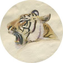 Claes tiger