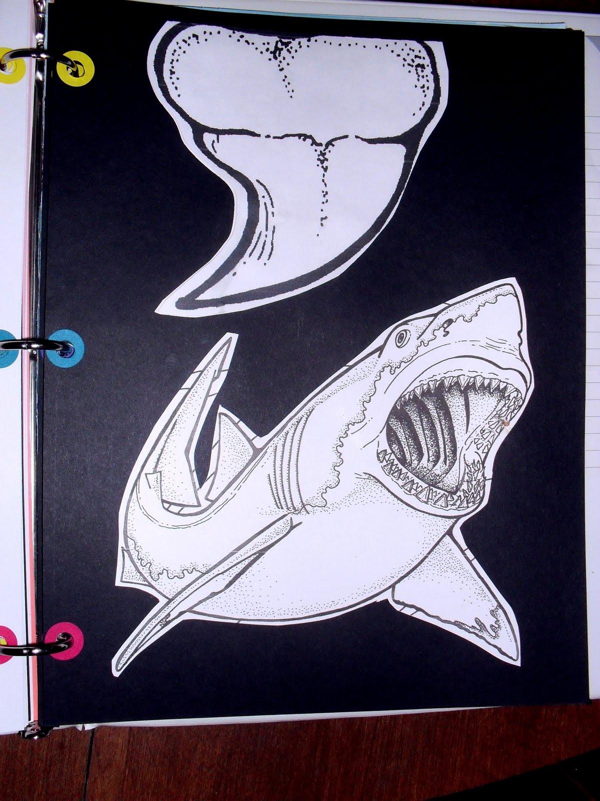 Loving Life Lapbooks Shark Lapbook Notebook Finished
