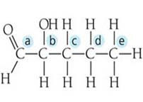 what is the relationship between carbon skeletons and functional groups