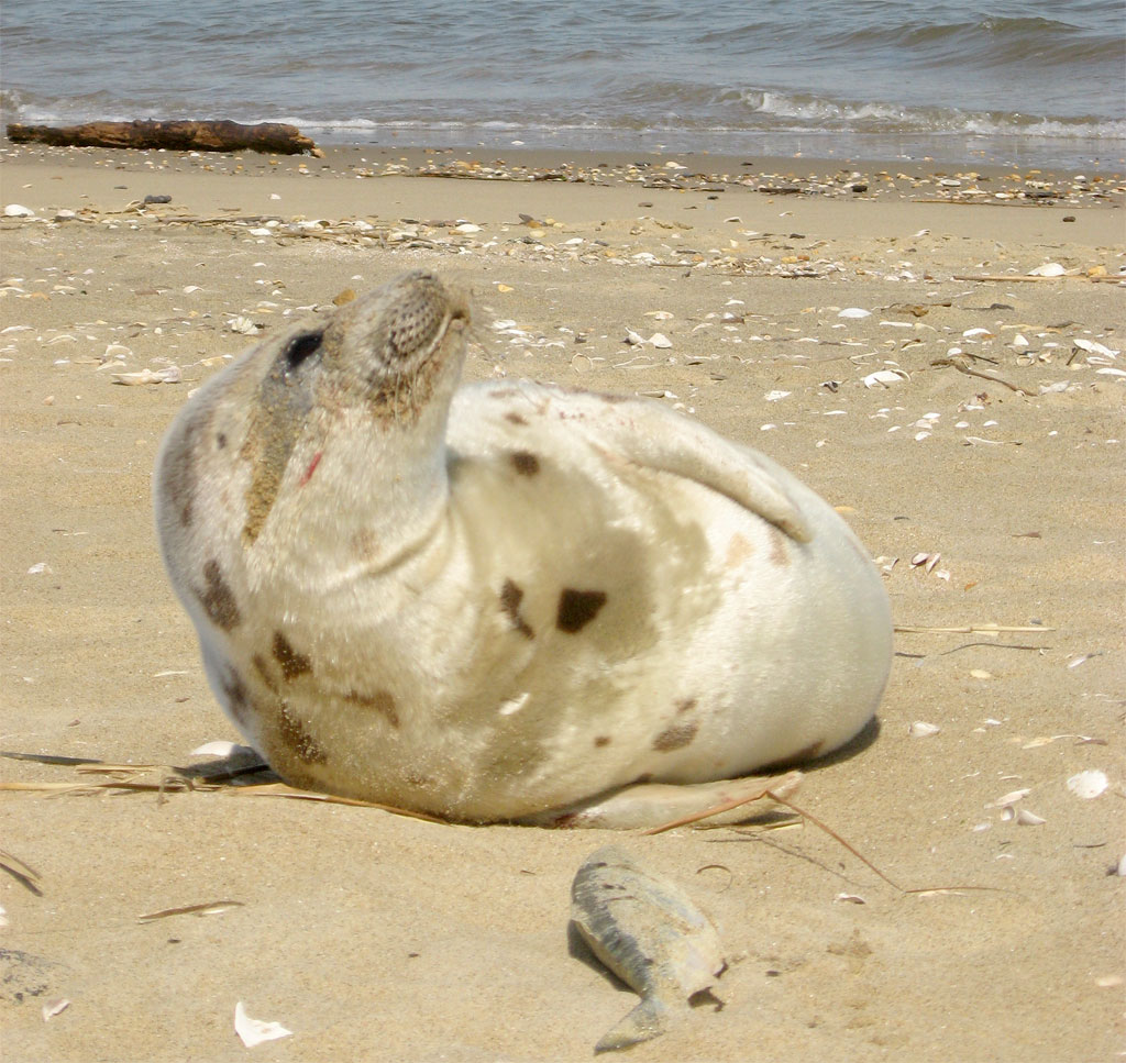 [seal-on-beach-for-web]