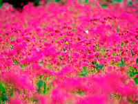garden wallpaper pink flower background pink wallpaper