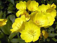 yellow flowers beautiful wallpaper flower desktop backgrounds flowers pictures