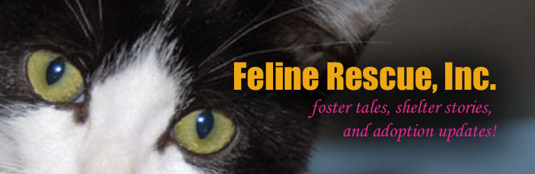 Feline Rescue Cat Tales