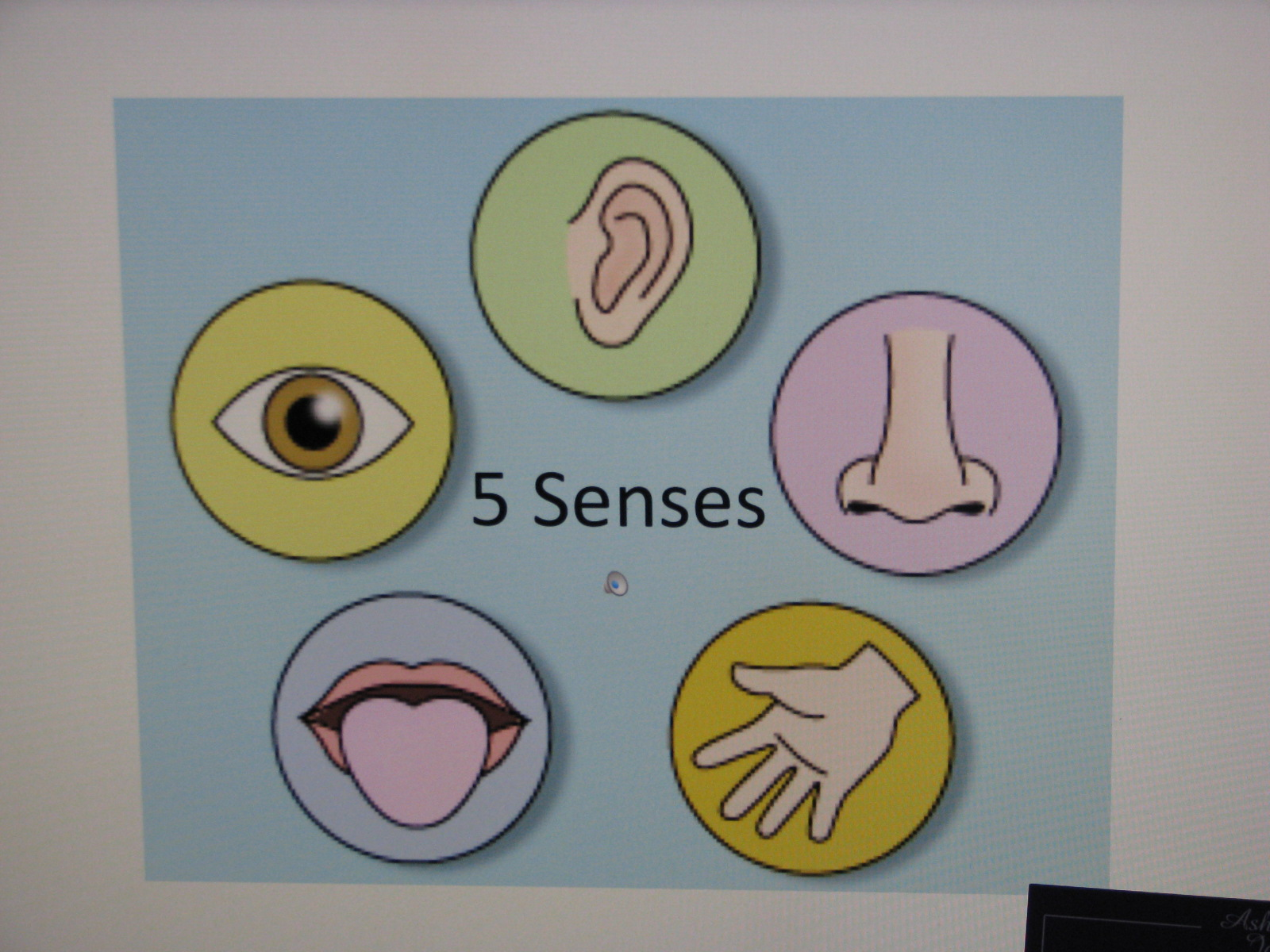 Preschool Activity Theme The Five Senses
