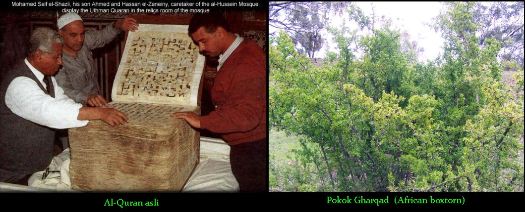 The Holy Quran & Gharqad Tree
