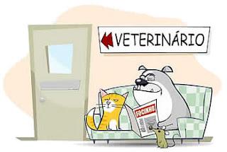 La cultura venezolana ya tiene su veterinario