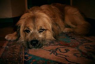 Futurama: Seymour el Perro (Triste)