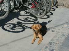 Cachorros em El Calafate