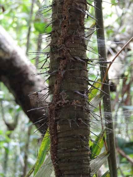 Caminhada passeio na floresta amazonica