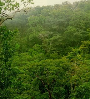 los ecosistemas selva alta perennifolia o bosque tropical