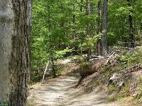 Sharp turn through trees