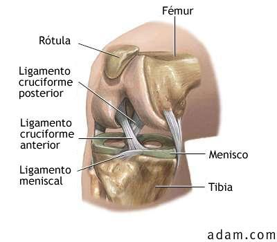 viVeMe: complejo articular de rodilla