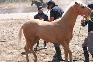 caballo debería tener tres cualidades de un hombre, tres de una mujer