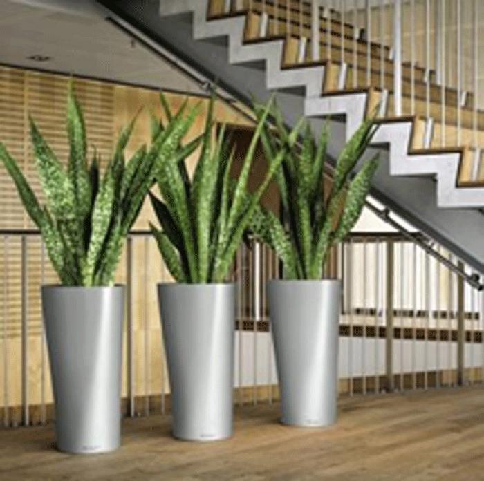 Calenzano citt sostenibile piante che purificano l 39 aria for Piante di case