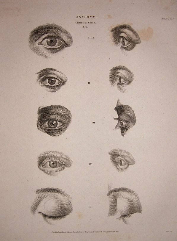 Figure Drawing: How to Draw Eyes - The Cyclopedia Book of ...