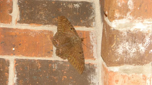 [moth]
