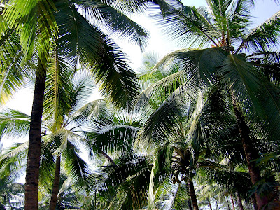 Free stock photos from Altered Black - Coconut Trees
