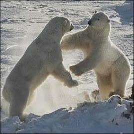 Kebahagiaan Beruang Kutub