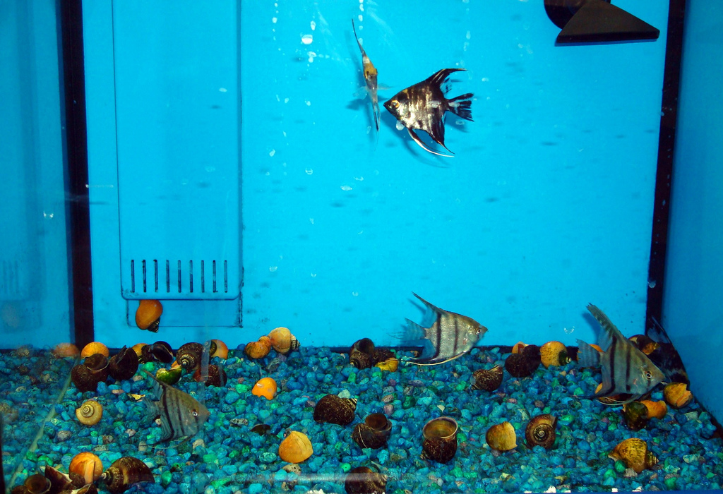 Tropical Fish At Walmart Here Is Classic Tank At Wally