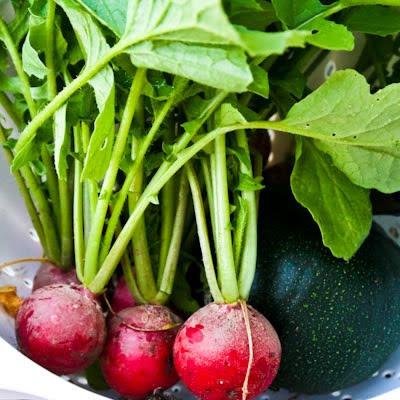 First garden veggies picked