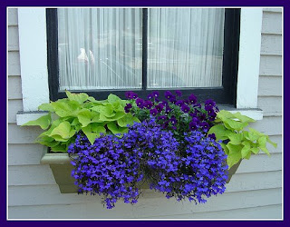 i: Window boxes are gardening at it's finest!