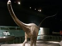Dinossauro inteiro - Real dinossaur