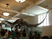 Fósseis de dinossauros no museu - Dinossaur fossils at the museum