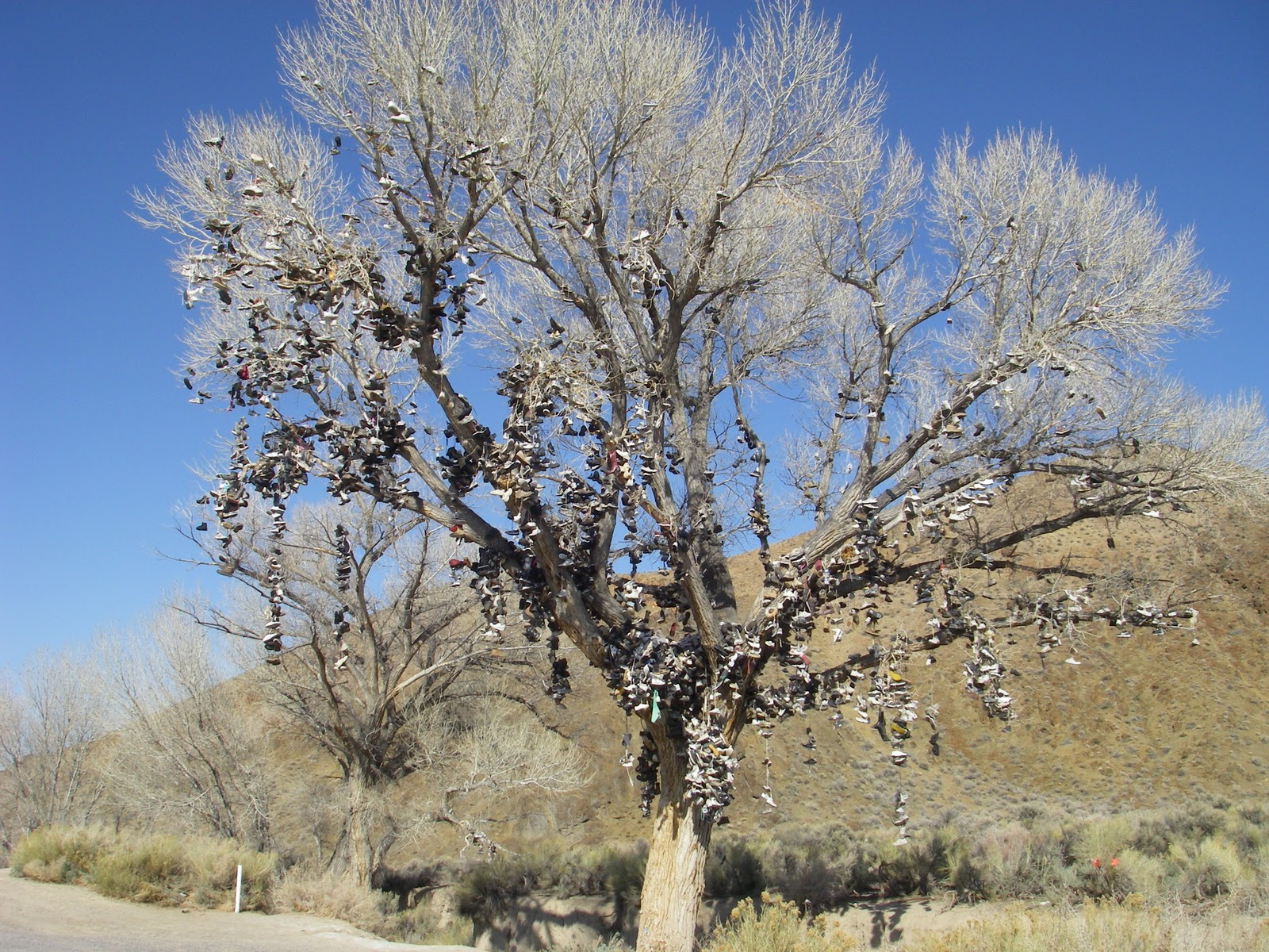 New Shoe Tree Nevada