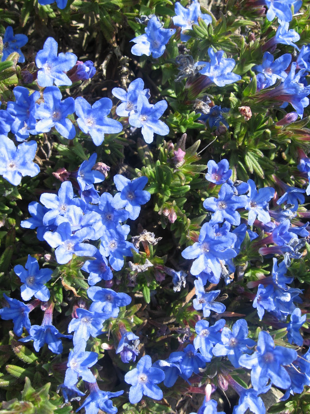 Displaying 17 gt images for blue and white flower names