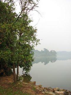 The fig tree at Upper Seletar: Addendum