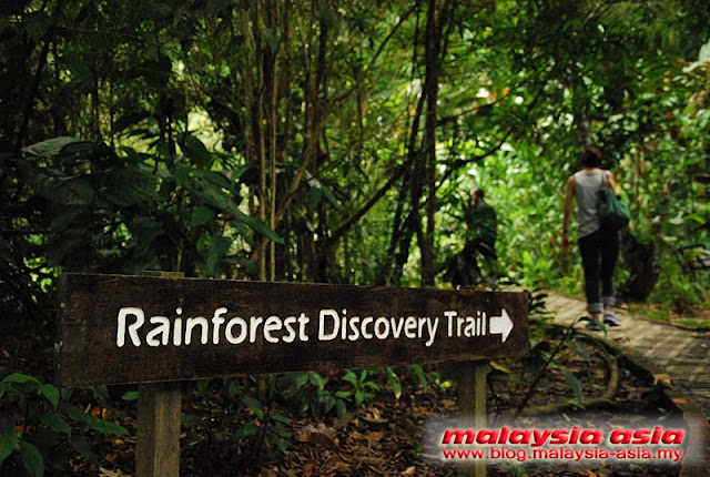 Nature Trail at Rainforest Discovery Center Sabah