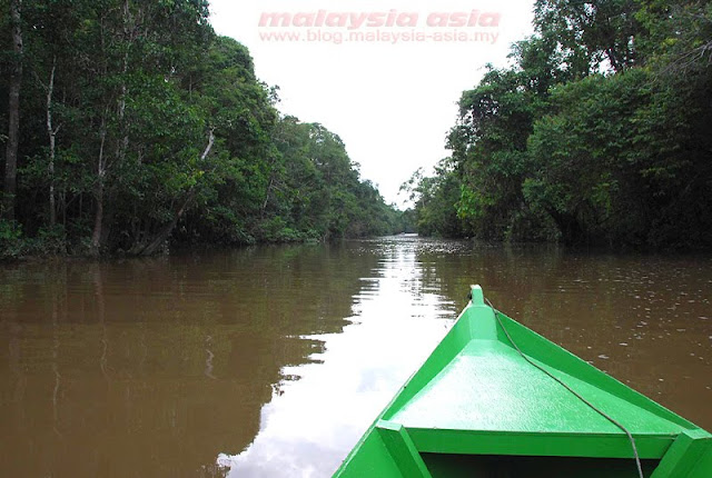 Cruise at Kinabatangan River