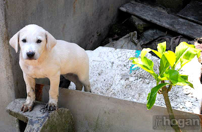 Malaysia puppy photo
