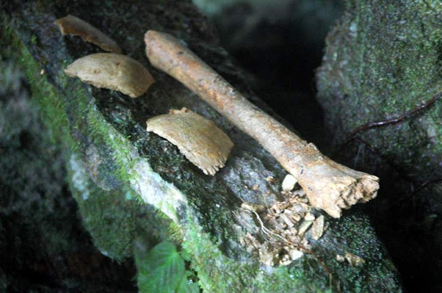 Mulu National Park Human Bones