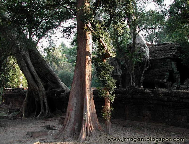 Picture of Ta Prohm Temple