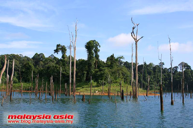 Photo of Dead Trees Tasik Kenyir