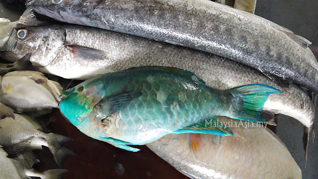 Sandakan Parrot Fish