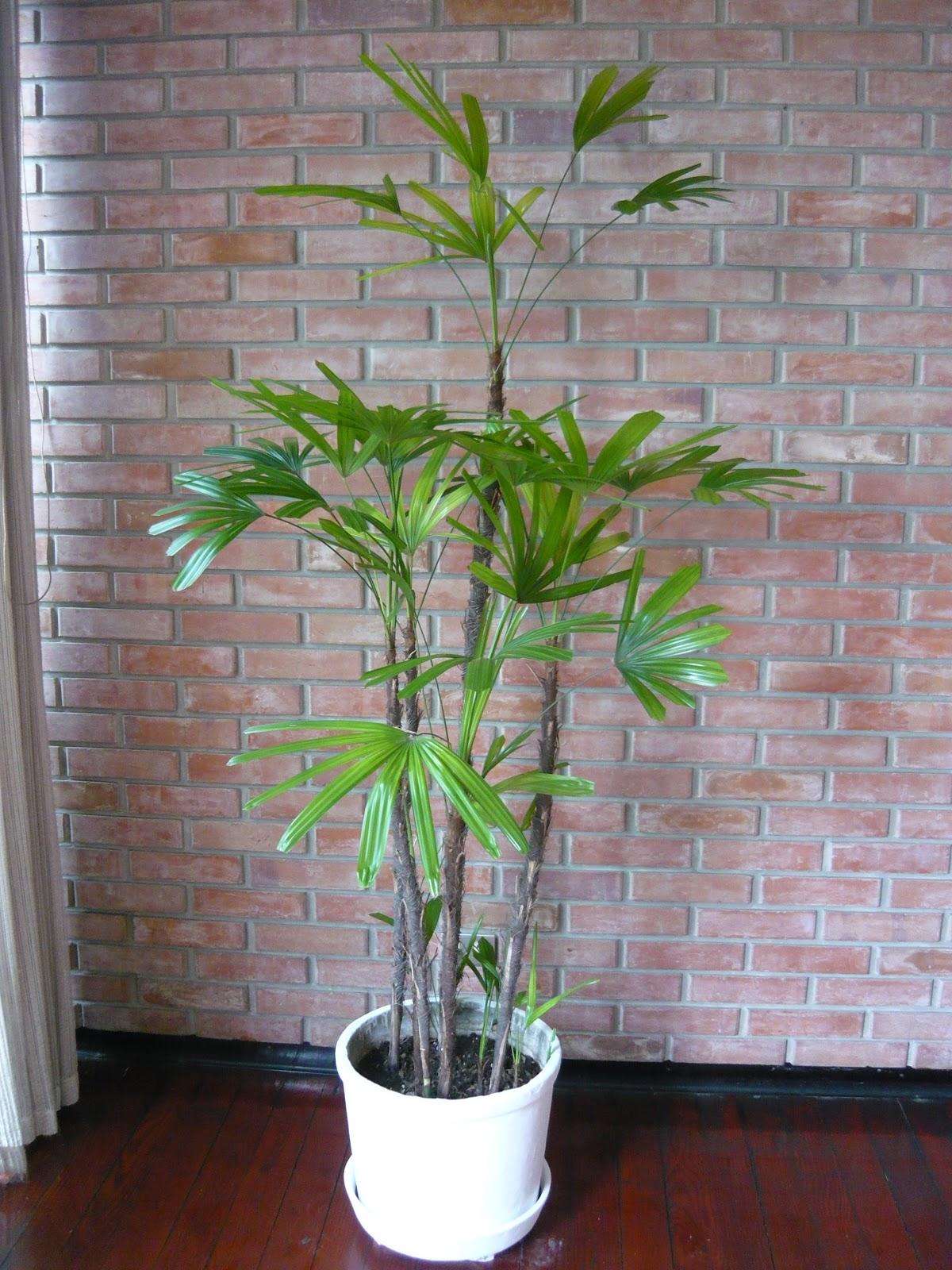 Plantas de Interior Macetas Grandes