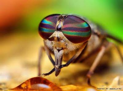 Ayat Ayat Kauniyah 0017 Keindahan Mata Serangga