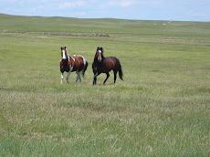 Wyoming Spring