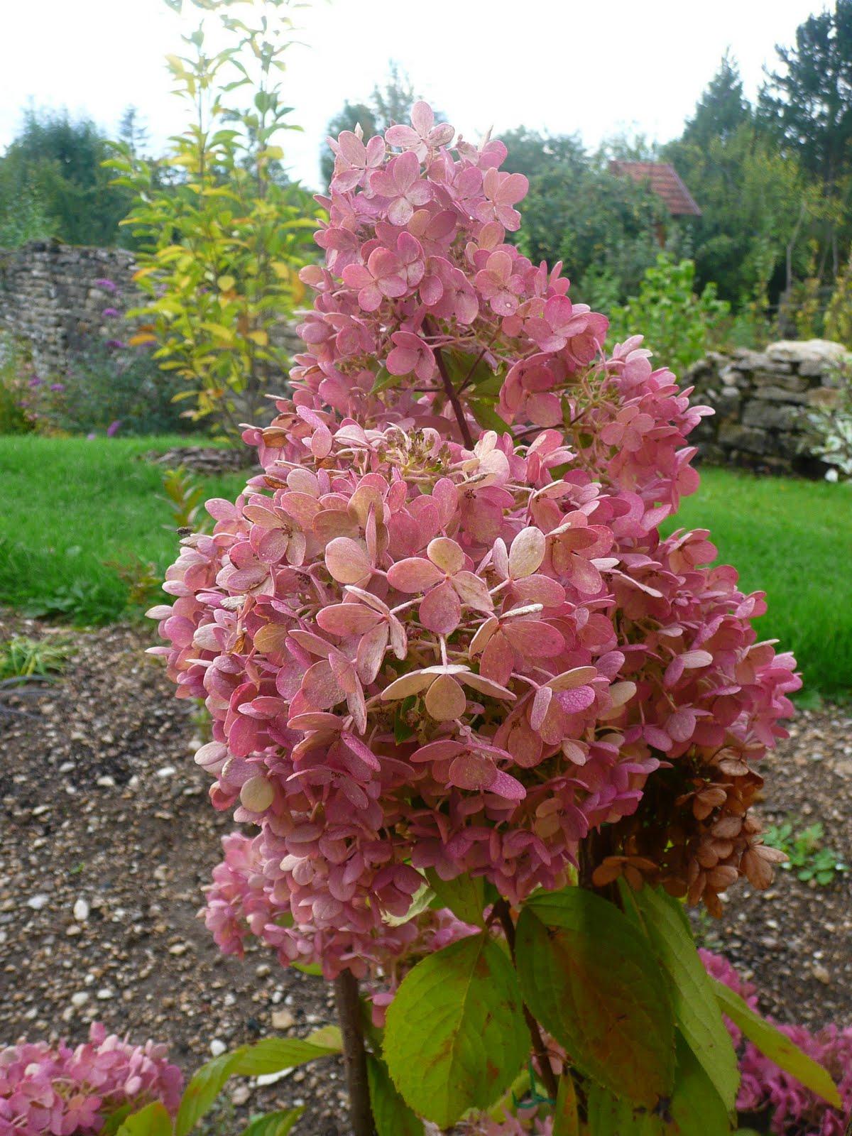Notre Jardin Secret Septembre 2010