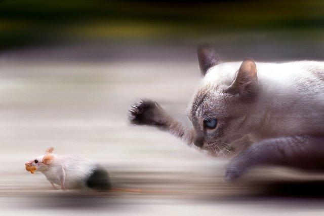 [kot-szczur.jpg]
