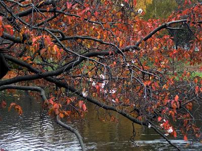 Svetlana Allikas Blossom tree in november