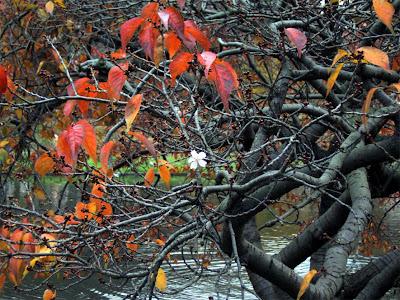 Svetlana Allikas blosson tree